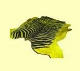 Шкура зебры желто-черная