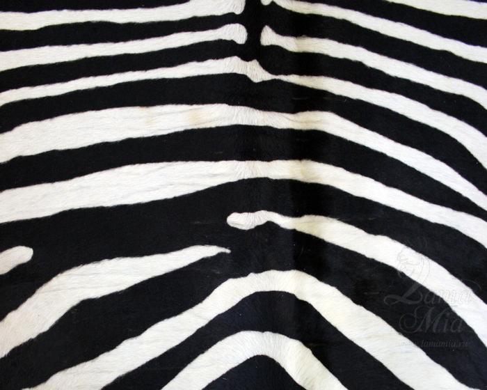 Следы поперечных складок на поперечных полосах шкуры зебры. lamamia.ru