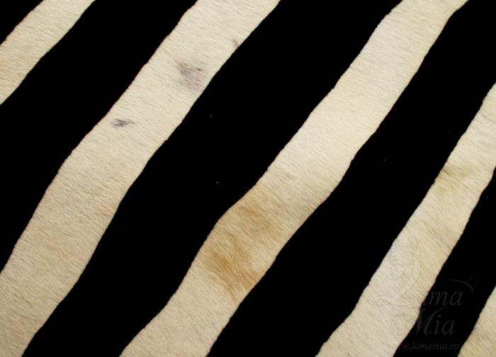 Жировые пятна и очаг с малым содержанием волос на шкуре зебры. lamamia.ru