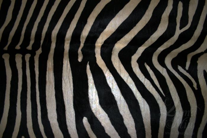 Фото участка шкуры зебры без вспышки с пониженной яркостью. lamamia.ru